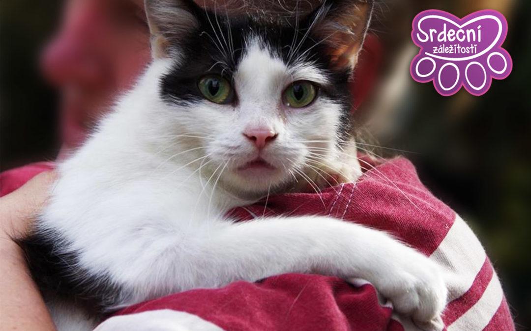 Černobílá kočička Maninka se těší na svůj nový domov