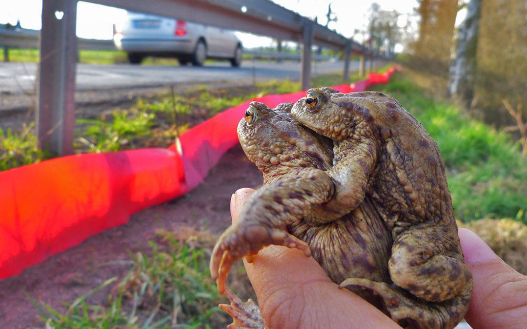 Přichází jaro a příroda se probouzí aneb stavění žabích přechodů je v plném proudu