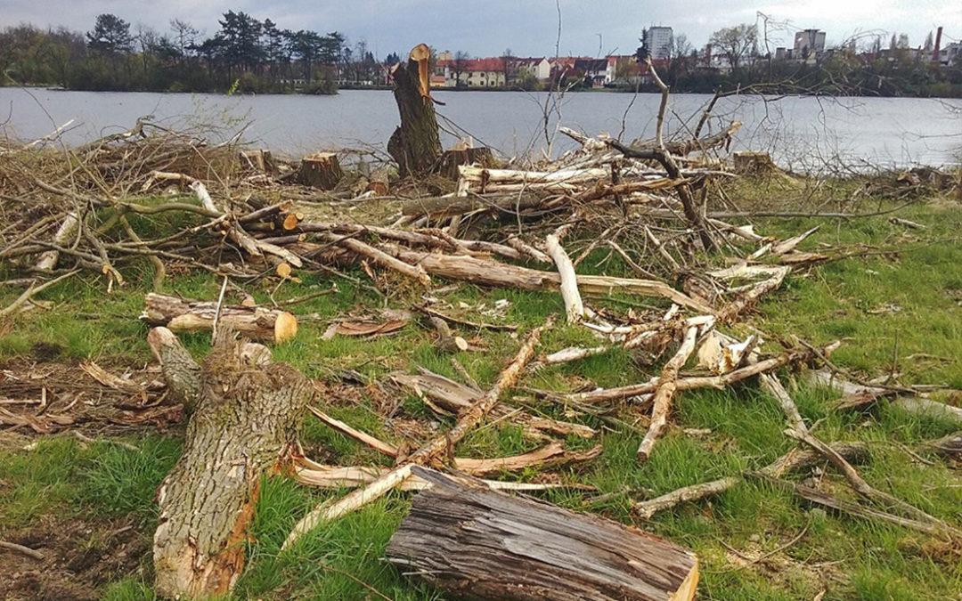 Obnova zeleně u rybníka Papeže má za sebou první etapu, na podzim proběhne výsadba nových stromů