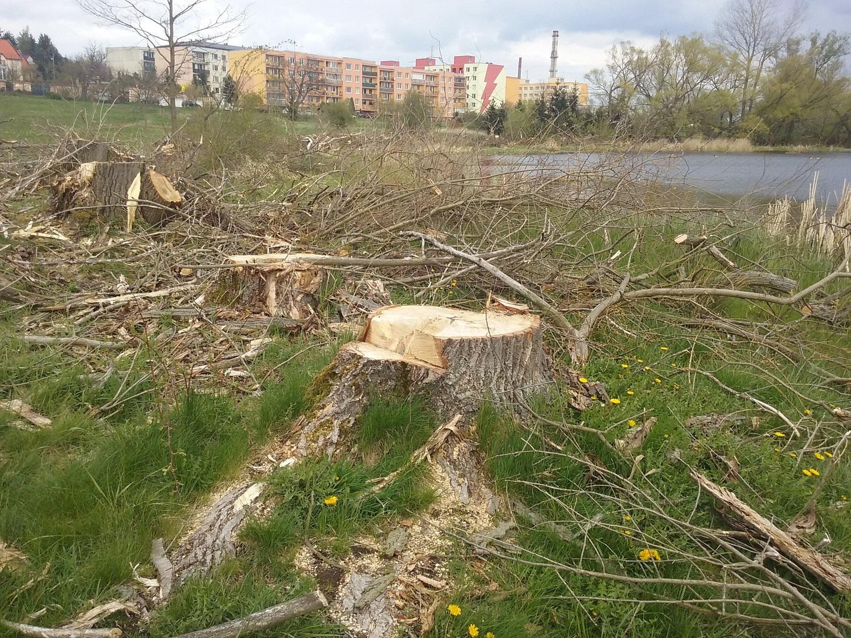 Kácení dřevin u Papeže  I  foto: Šárka Spáčilová