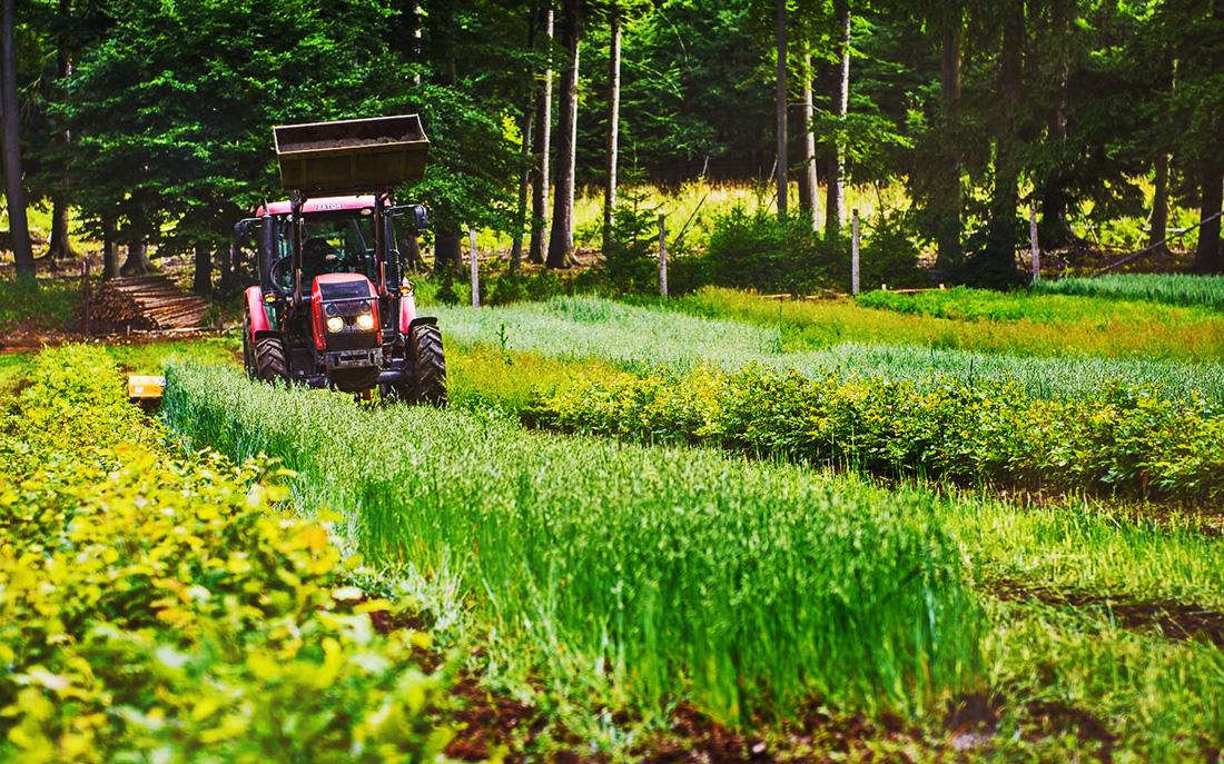 Obhospodařování lesních školek I foto: FB archiv C-M