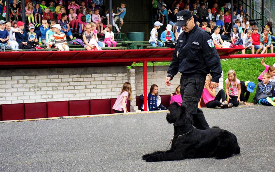Služební pes MP Dobříš Paganini pomáhá v Dobříši hlídat bezpečnost