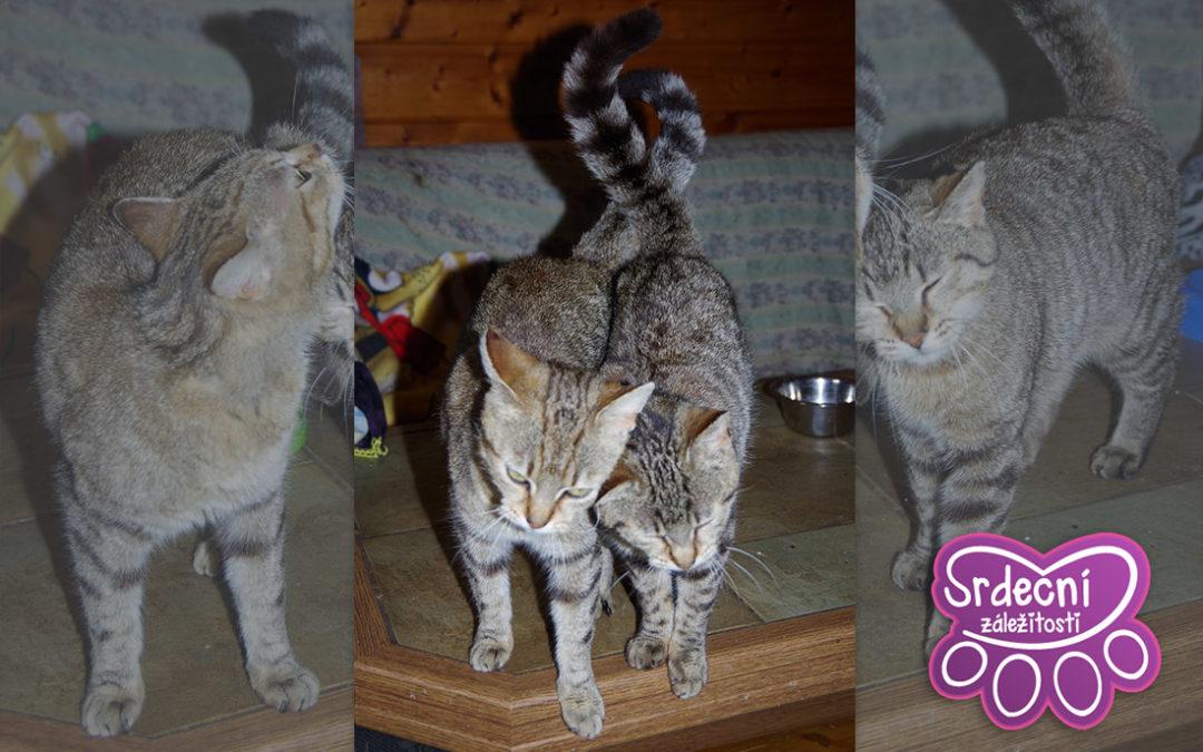 Srdeční záležitosti hledají domov pro dvě kočičí krásky! A také vysvětlují, proč je kastrace důležitá