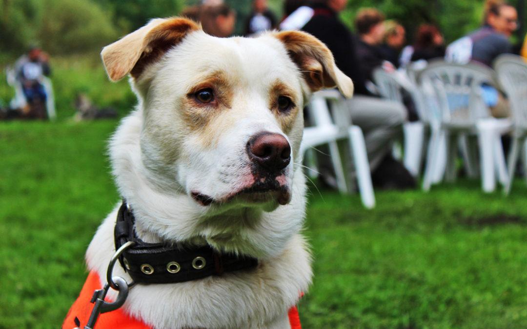 V Památníku Karla Čapka se sešli milovníci psů – voříšků