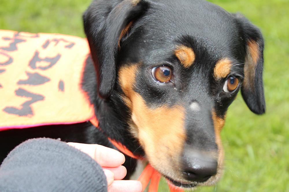 Výdělek z akce pomůže uhradit veterinární náklady  I  foto: Šárka Spáčiová